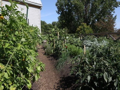 Vente de plants et semences biologiques